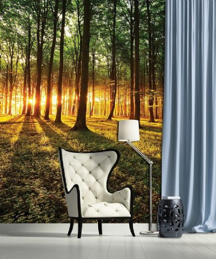 Forest scene sunrice wallpaper mural
